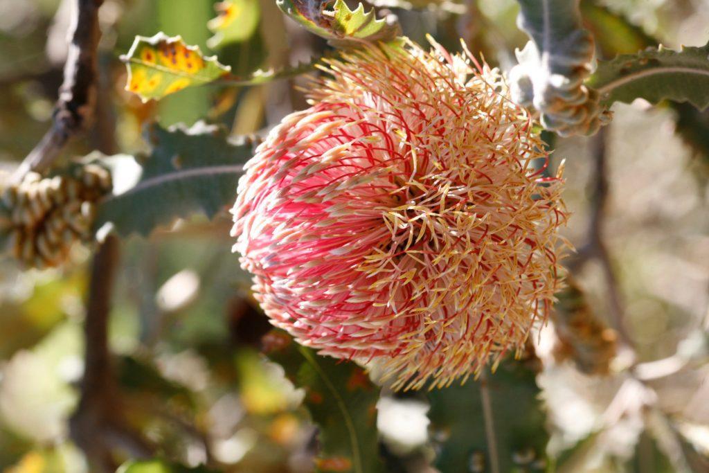 Esperienza naturalistica in Australia