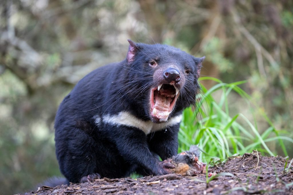Animali in Australia