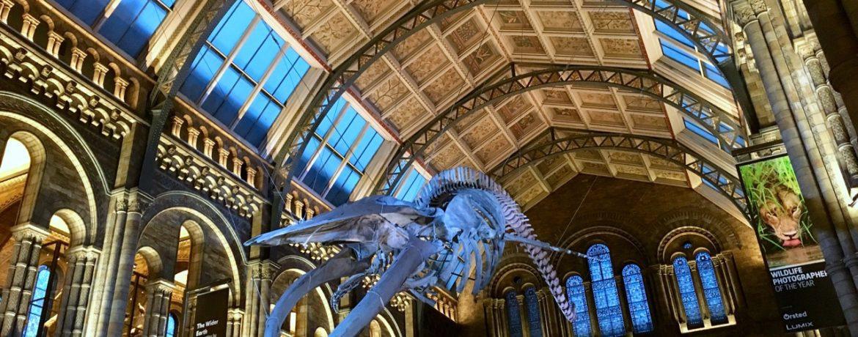 Atrio del Museo di Storia Naturale