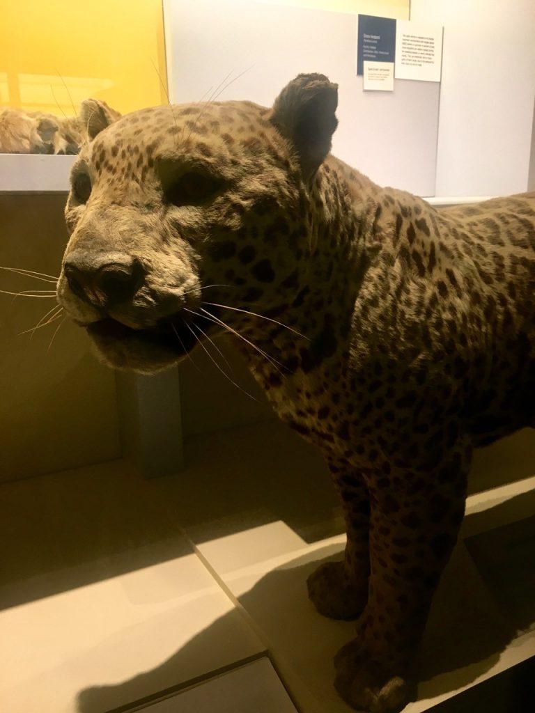 Sezione mammiferi al Museo di Storia Naturale